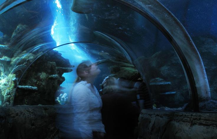 Sealife London Aquarium Kay Elliott